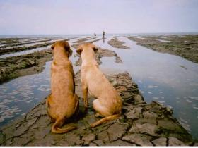 dogs with fishermen
